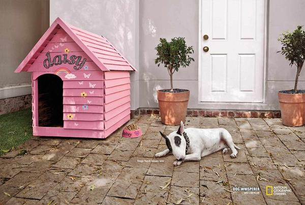 趣味《國家地理》廣告 – 小狗們都有煩惱