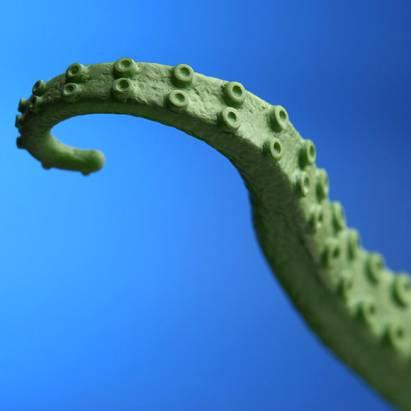 讓人心癢癢的超詭異章魚腳