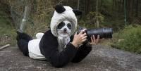 在熊貓園裡的奇妙工作內容:扮成熊貓