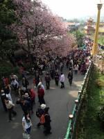 用手機逛花季之淡水天元宮遊記