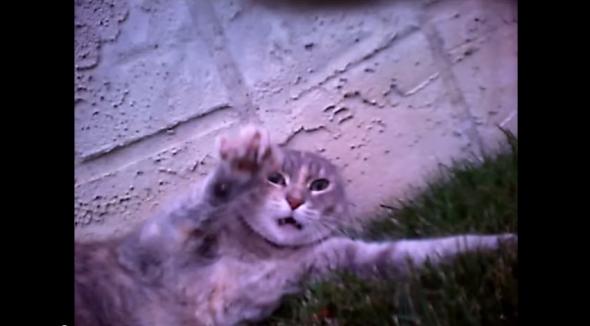 家中柔情小貓原來是貓貓惡霸!脖子上裝寵物相機偷看貓的另一面