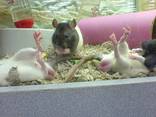 癮科學:讓我們關心太空飛鼠的睪丸過熱問題,然後也關心一下自己的…