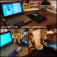 [分享][鼠墊開箱]貓奴的困擾就交給Acheron A3L來解決
