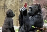 老少咸宜不是講假的,連黑猩猩都識貨的 DSi XL