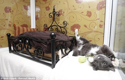 精緻嬌貴貓用 HOTEL,比主人家還舒適喔(誤)