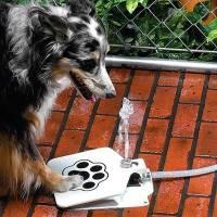 讓狗狗學會靠自己喝好水的方便小物!