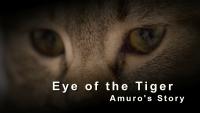 影音作品-猛虎之眼 阿姆羅的逆襲!