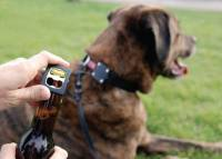 開車不能喝酒,那遛狗總可以喝酒了吧…