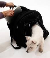 [好物] 筆電愛狗一背就走,當個優雅的愛狗現代女孩!