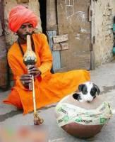 怕蛇的印度耍蛇人如何維持生計