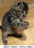 英國研究說...貓比狗笨?