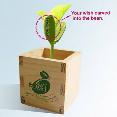 [好物] 送鑽石求婚之前,先送這個「告白魔豆」給我吧~