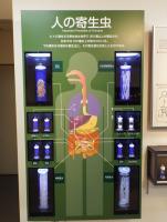 面對 接受 處理 然後放下,日本目黑寄生蟲博物館