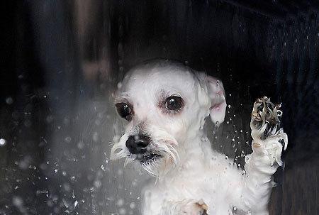 [閒聊] 大家都怎麼洗貓狗?