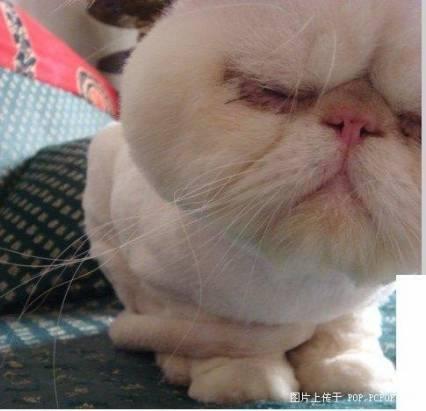 史上最囧的貓
