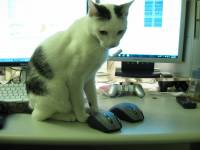 我的3C狂熱之尋找滑鼠之旅-購買篇--VX Revolution入手