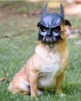 蝙蝠~ 的狗狗^^很威風喔