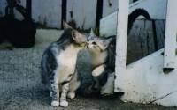 請給我一個吻-拍攝動物之間的接吻