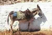 電驢是真的!土耳其推出太陽能行動供電驢子外掛...