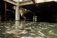 特別的景點︰荒廢的曼谷新世界商場變魚塘