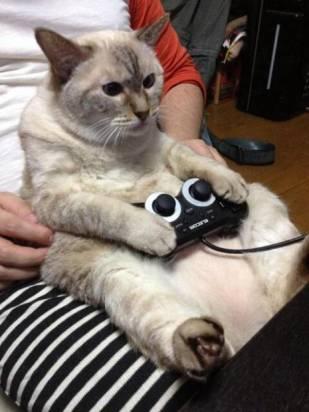 貓語錄:「人界太無聊,只好整天打 Game...」