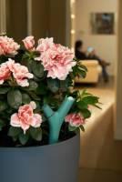 Parrot Flower Power 植物偵測器在台推出,讓拈花惹草也變得更智慧化