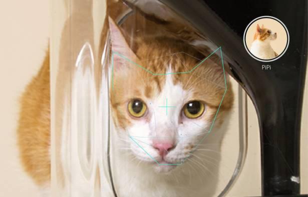 台灣廠商 42 ARK 於 Indiegogo 發起 Bistro 貓臉辨識智慧餵食器集資