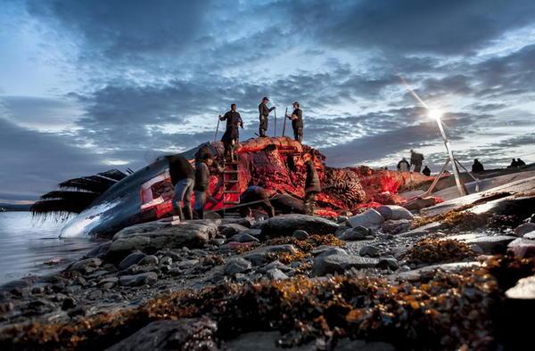 2014 Sony 世界攝影獎精彩照片 20 張