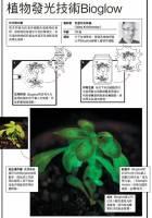 【圖解看科技】Innovation創新:植物發光技術Bioglow