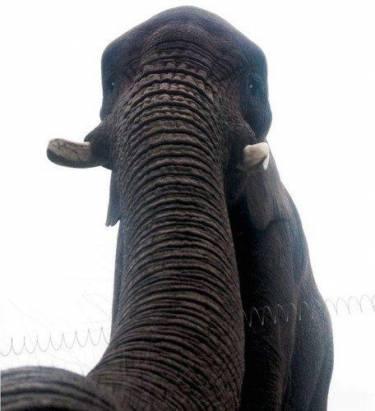自拍潮流席捲動物界?世上首張大象自拍曝光