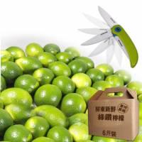 綠鑽檸檬6斤+陶瓷摺疊刀