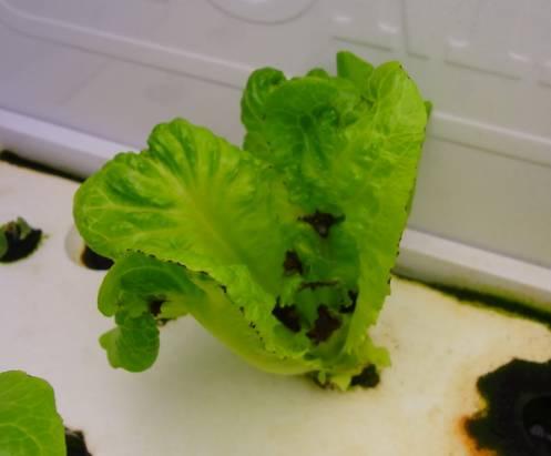 宅在家也可以輕鬆當農夫,HOME LOHAS 療癒系植物栽培箱,讓你「種得到,看得到,吃得到」的蔬菜全新體驗