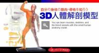 半透明3D人體解剖全身模型