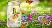仿生蝴蝶罐Butterfly jar- 鮮黃