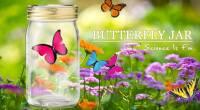 仿生蝴蝶罐Butterfly jar-桃紅