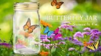 仿生蝴蝶罐Butterfly jar- 亮橘