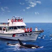 【花蓮】鯨世界-賞鯨成人票一張