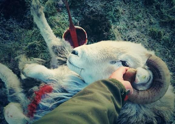 守護文化的牧羊人,重新發現社交媒體的單純力量