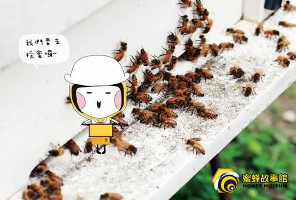 【蜜蜂故事館】台灣嚴選特賞龍眼花蜜700gx3瓶