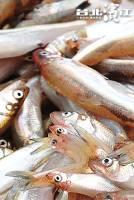 金黃魚蛋,營養滿點新鮮柳葉魚 200g 包