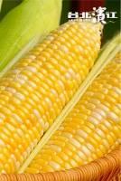 【免運】北海道進口雙色甜玉米 400~450g 支,共5支