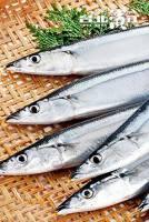極品鮮嫩秋刀魚 600g 4尾