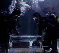 只要擊退這群鯊魚, Xbox One 就是你的了(誤)