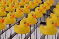 如何讓電機變有趣?那就出動「黃色小鴨」吧!