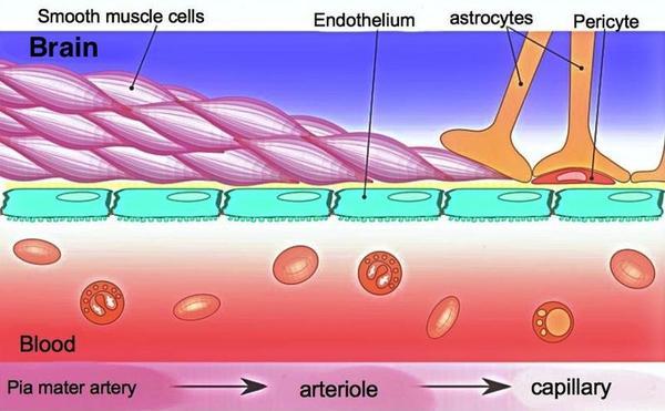 [科技新報]帕金森氏症治療展望: 巨噬細胞木馬屠城