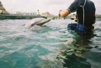 你知道海豚與同伴之間可能也用「名字」相稱嗎?