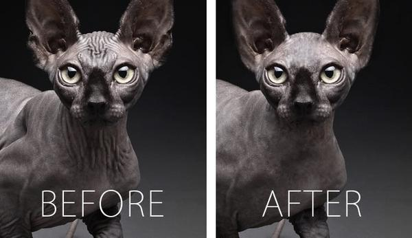 PS 貓咪可以賺大錢?一個後製師的奇異經歷