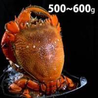【尋鮮本舖】肥美肉厚の生凍旭蟹。500~600g