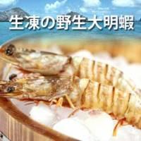 【尋鮮本舖】輕鬆料理的高級美味。生凍の野生大明蝦 10隻入 。500g 包
