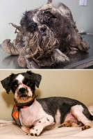 難以置信的16 張照片︰流浪小狗被拯救的前與後
